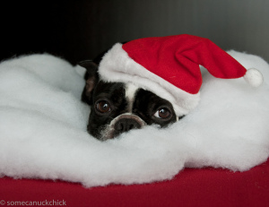 holidaypuppy