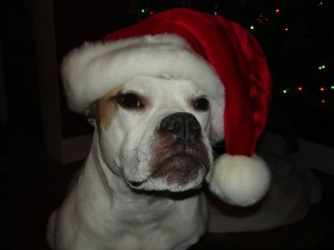 Roxy Christmas